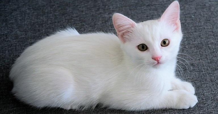 Doença silenciosa: especialista alerta para a doença renal nos gatos