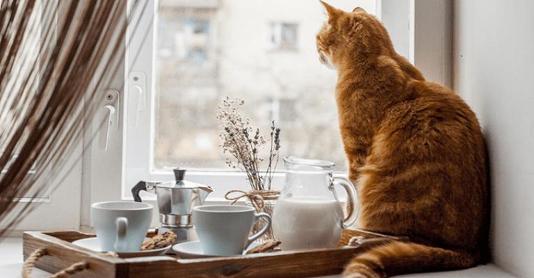 Pets no condomínio: como conquistar um ambiente saudável para todos