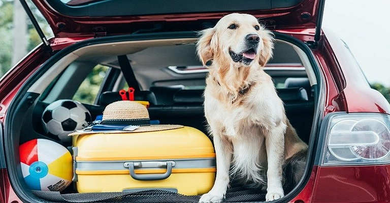 Férias com o melhor amigo! Veja dicas para viajar com os pets em segurança