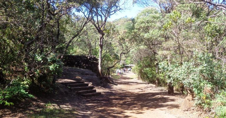 Semana do Meio Ambiente é comemorada com eventos em Minas