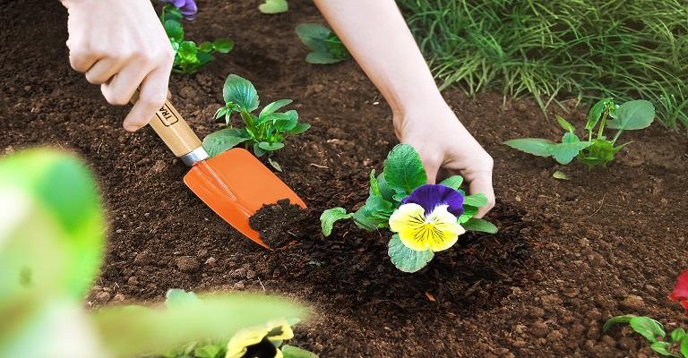 Como transformar resíduos orgânicos em nutrientes para suas plantas