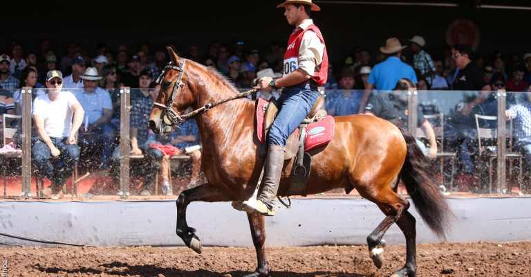Exposição Nacional do Cavalo Mangalarga Marchador registra balanço positivo