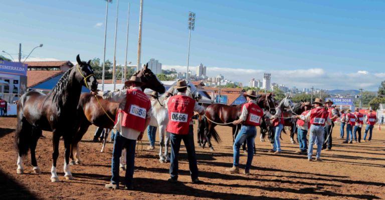 BH recebe 38ª Exposição Nacional do Cavalo Mangalarga Marchador