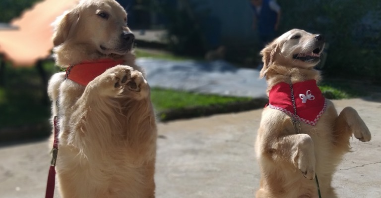 Cães auxiliam crianças e adultos com deficiências