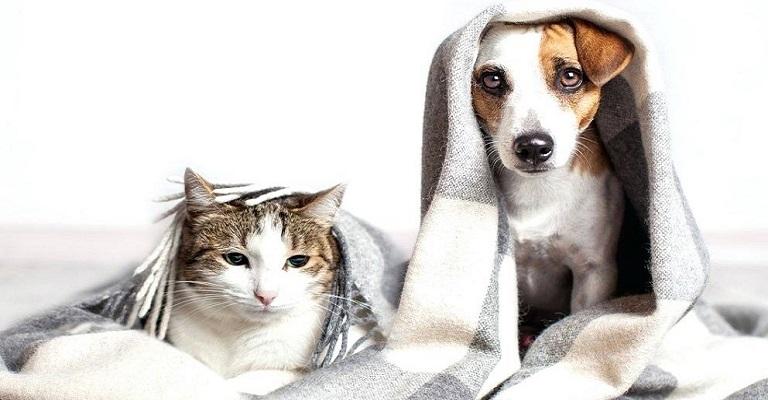 Confira 6 dicas para proteger os pets durante o inverno
