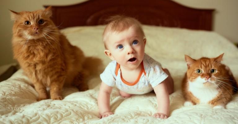 Os mitos sobre gatos e gestantes