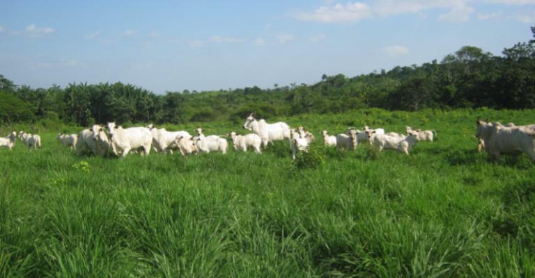 ONU faz alerta sobre produção global de alimentos