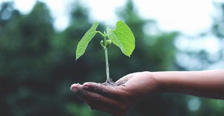 Como transformar a nossa relação com a natureza?