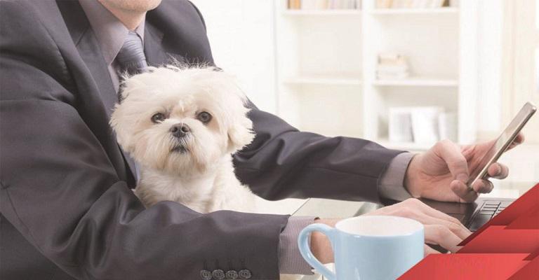 Pets na empresa? Eles podem ajudar na produtividade e reduzir o estresse