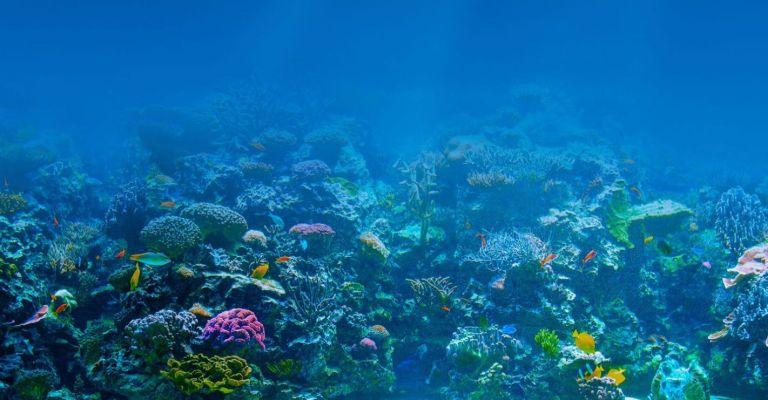 Oceanos são o verdadeiro pulmão do mundo, diz pesquisador