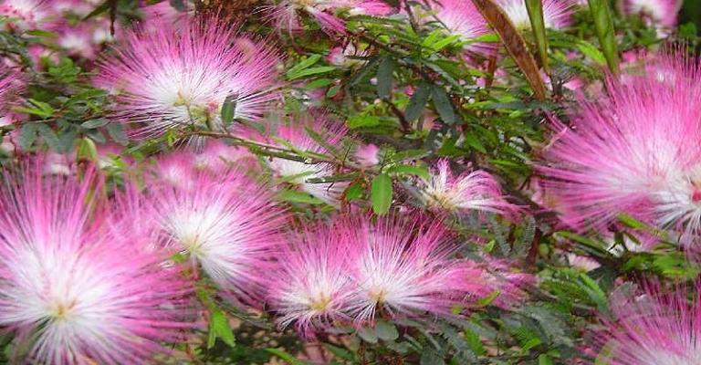 Saiba quais são as flores mais indicadas para cultivo na primavera