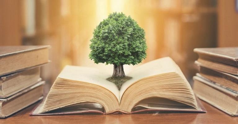 A Gestão da Educação Ambiental