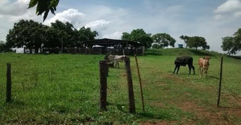 Brasil tem 5 milhões de estabelecimentos rurais, aponta censo