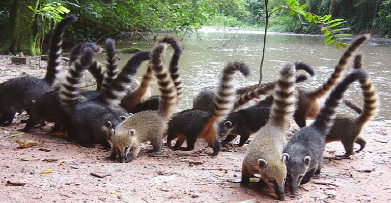 Pós-graduação em Conservação da Fauna da UFSCar oferta mestrado profissional