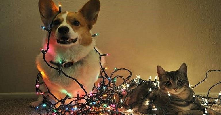 Decoração de Natal pode ser um perigo para os pets