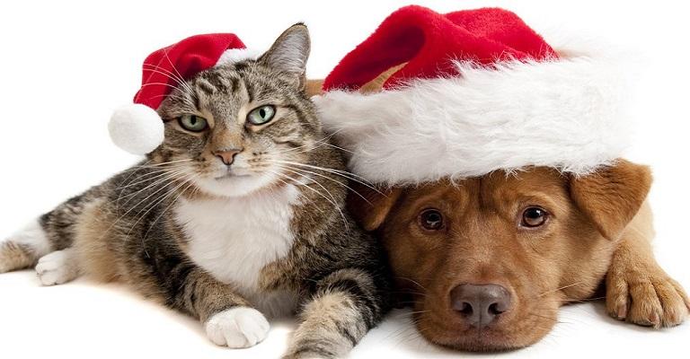 Pets como presente de Natal? Veterinário lista os prós e os contras