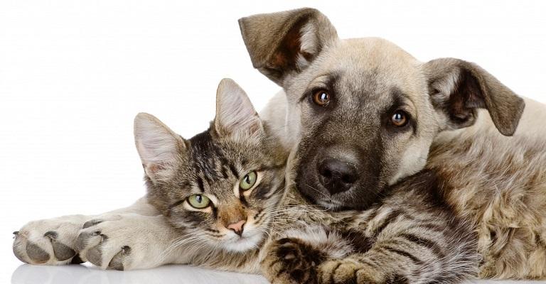 Depressão: Cães e gatos também sofrem com a doença