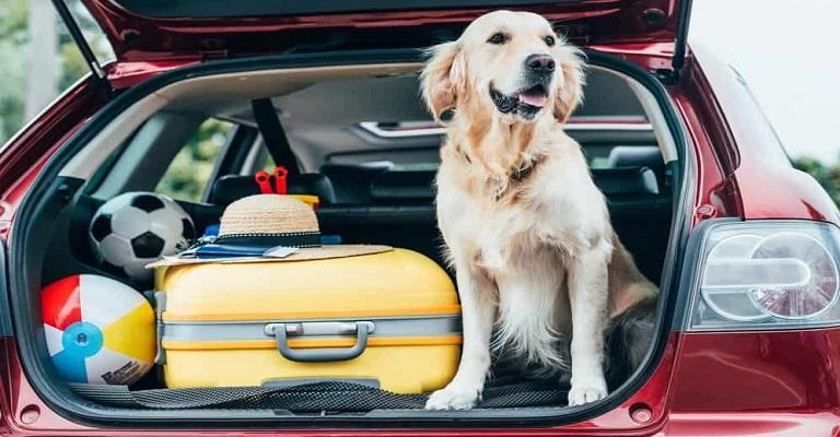 Férias: como viajar com meu cachorro?