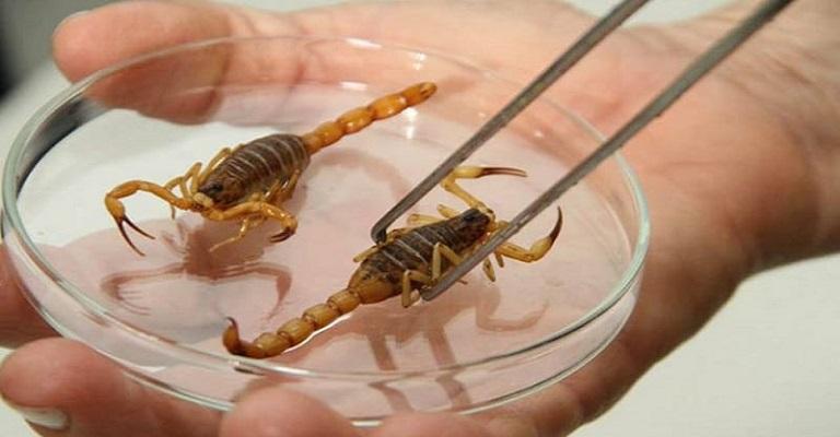 Com a chegada do verão, saiba como evitar os acidentes com os escorpiões