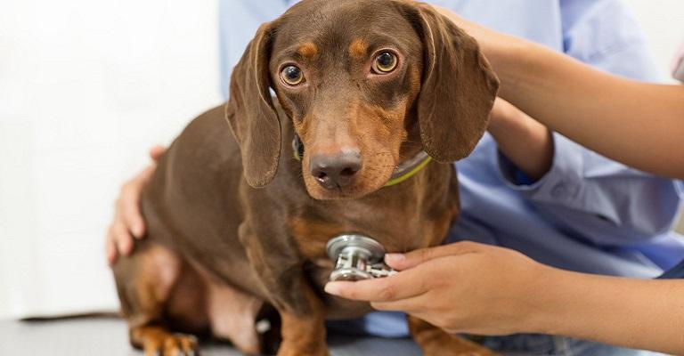 Check-up pode prolongar a vida dos pets e gerar economia para o seu bolso