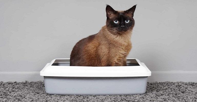 Dicas simples para adaptar seu gato ao ambiente doméstico