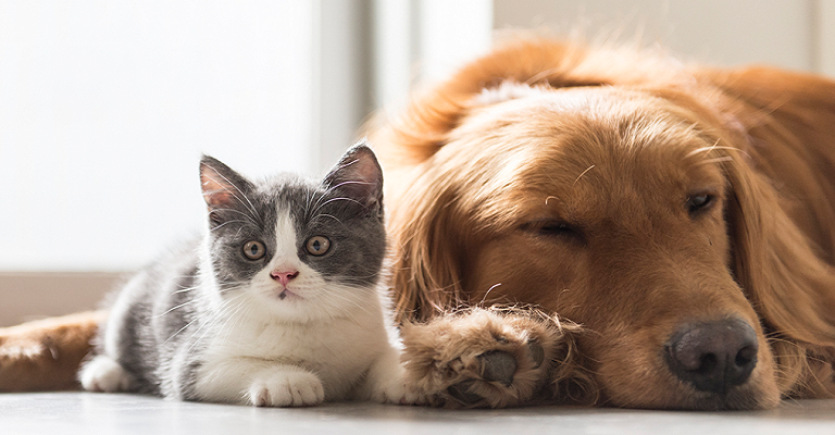 Coronavírus em pets: o vírus reage da mesma forma que em humanos?