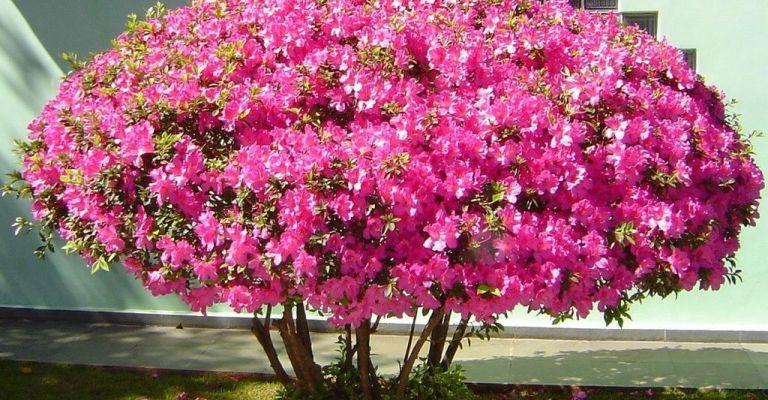 As flores mais indicadas para cultivo no outono