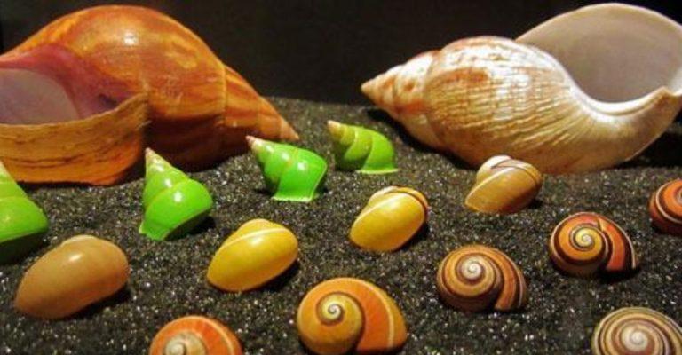 Nando Reis doa coleção de conchas para Museu Nacional