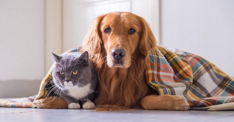 O inverno e os pets: combinação perigosa