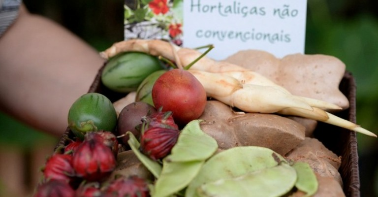 Projeto estimula cultivo de hortaliças não convencionais