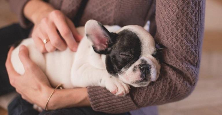 10 dicas para receber um novo pet em casa