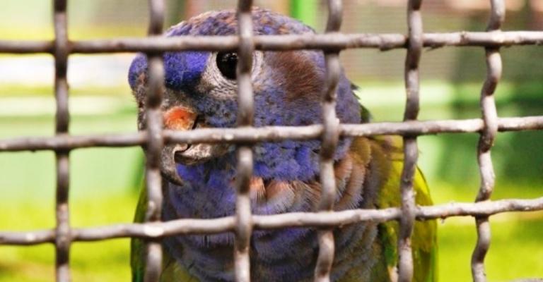 Organização pressiona G20 pelo fim do comércio de animais silvestres