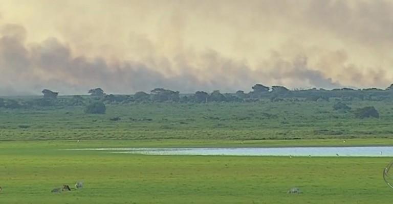 Queimadas no Pantanal: ameaça à biodiversidade