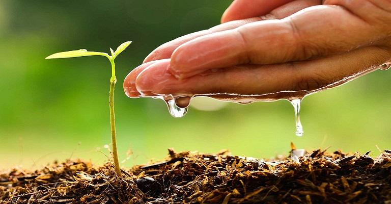 A emancipação do ser humano na construção de um planeta saudável