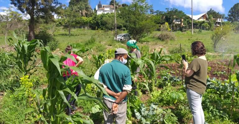 Projeto de agrofloresta é implantado em Brumadinho