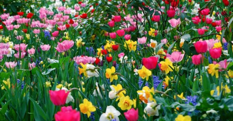 Setor de flores em vasos cresceu em 2020