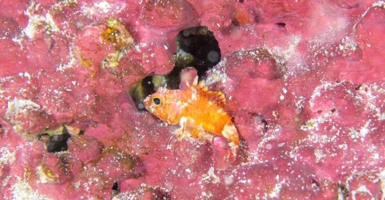 Expedição científica descobre quatro novas espécies de peixe em Noronha