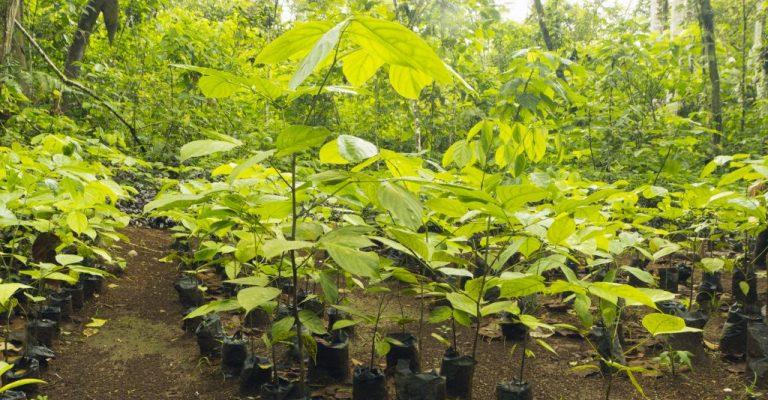 ONG planta 265 milhões de árvores no Brasil