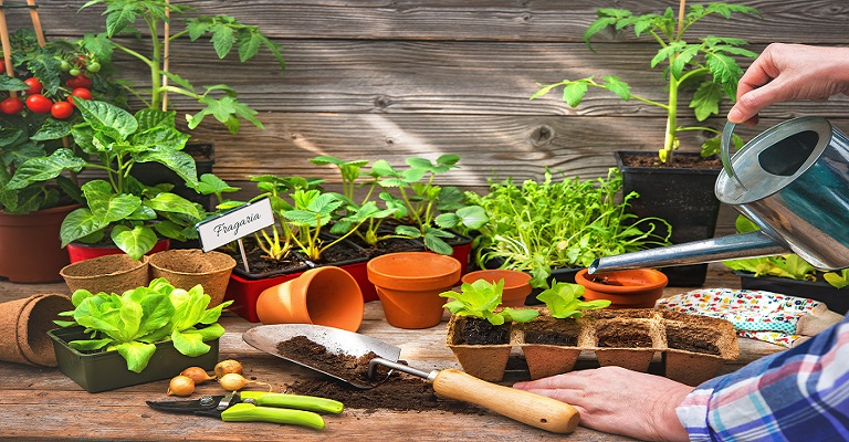 As principais dúvidas sobre como ter uma horta em casa