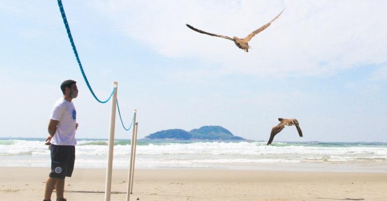Projeto de Monitoramento de Praias registra mais de 8 mil aves marinhas